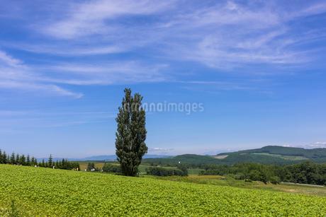 丘の町・美瑛の田園風景の写真素材 [FYI01732251]