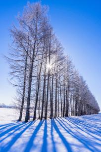 北の大地の雪景色の写真素材 [FYI01732252]