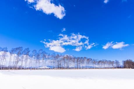 北の大地の雪景色の写真素材 [FYI01732295]