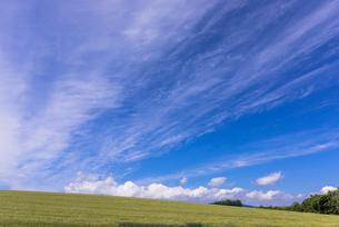 丘の町・美瑛の田園風景の写真素材 [FYI01732384]