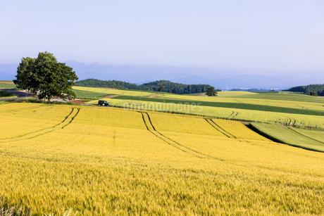 丘の町・美瑛の田園風景の写真素材 [FYI01732406]