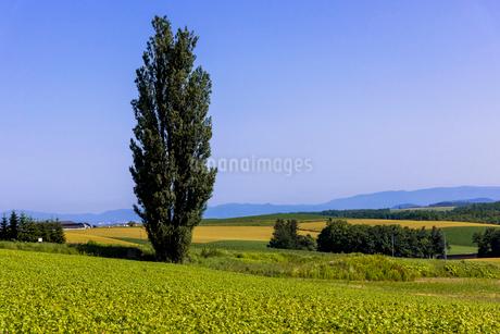 丘の町・美瑛の田園風景の写真素材 [FYI01732421]