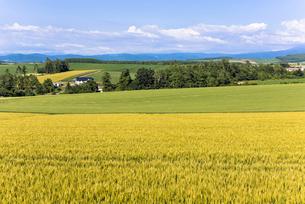 丘の町・美瑛の田園風景の写真素材 [FYI01732470]