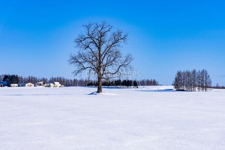 北の大地の雪景色の写真素材 [FYI01732528]