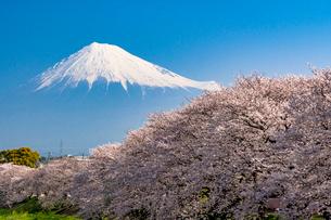 龍巌淵の満開の桜と富士山の写真素材 [FYI01732529]