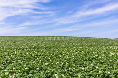 丘の町・美瑛の田園風景の写真素材 [FYI01732569]