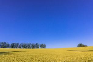 丘の町・美瑛の田園風景の写真素材 [FYI01732659]