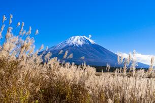 朝霧高原のススキ原と富士山の写真素材 [FYI01732670]