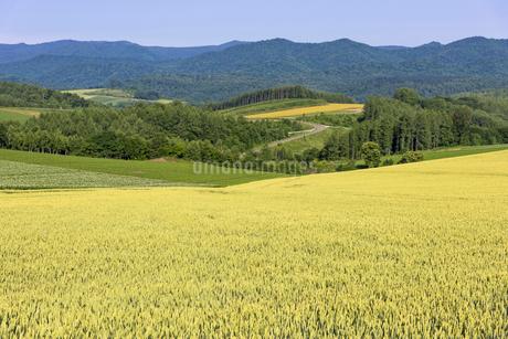 丘の町・美瑛の田園風景の写真素材 [FYI01732698]