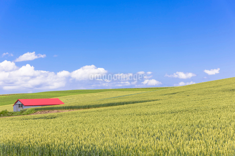 丘の町・美瑛の田園風景の写真素材 [FYI01732715]