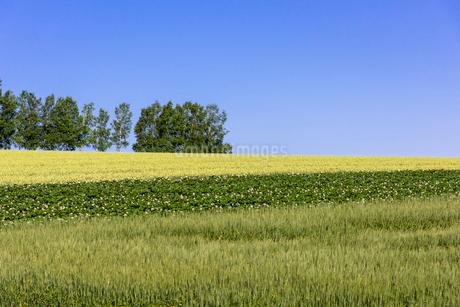 丘の町・美瑛の田園風景の写真素材 [FYI01732823]