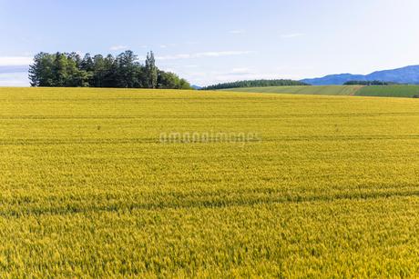 丘の町・美瑛の田園風景の写真素材 [FYI01732839]