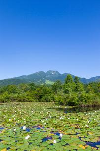 スイレン咲くいもり池と妙高山の写真素材 [FYI01732922]
