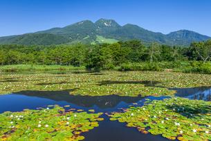 スイレン咲くいもり池と妙高山の写真素材 [FYI01733287]