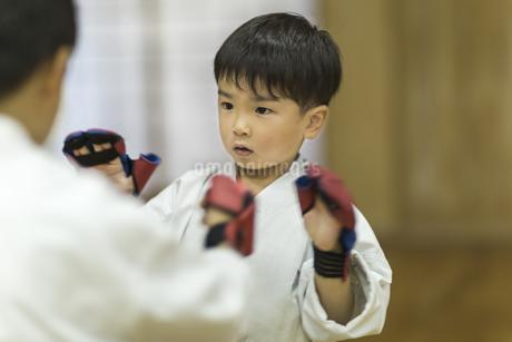 空手の稽古をする男の子の写真素材 [FYI01733449]