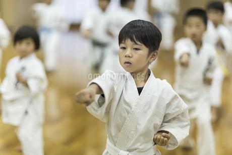 空手の稽古をする男の子の写真素材 [FYI01733456]