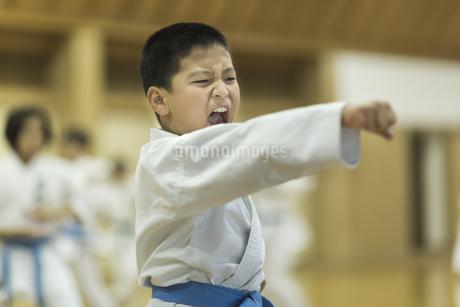 空手の稽古をする男の子の写真素材 [FYI01733500]