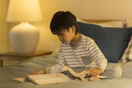 恐竜の模型を持って図鑑を眺める男の子の写真素材 [FYI01733720]
