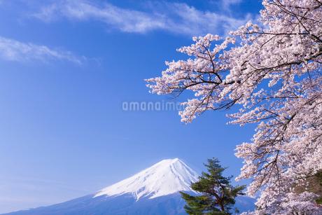 河口湖の桜と富士山の写真素材 [FYI01734061]