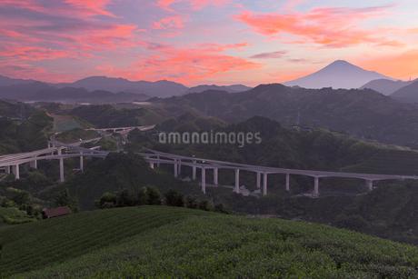 朝の茶畑と新東名高速道路と富士山の写真素材 [FYI01734071]