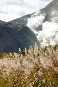 川湯硫黄山とススキの写真素材 [FYI01734348]