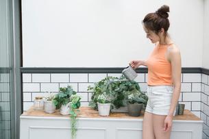 庭の植物に水をあげる30代女性の写真素材 [FYI01734445]
