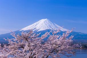 河口湖の桜と富士山の写真素材 [FYI01734905]