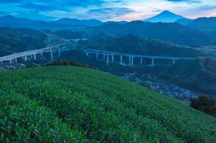 朝の茶畑と新東名高速道路と富士山の写真素材 [FYI01734928]