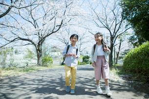 桜の木の下を歩く小学生男女の写真素材 [FYI01738060]