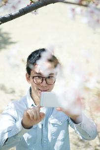 桜の木の携帯で写真を撮る20代男性の写真素材 [FYI01738193]