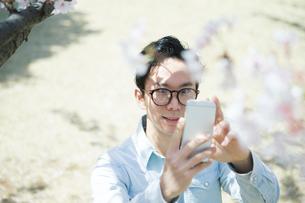 桜の木の携帯で写真を撮る20代男性の写真素材 [FYI01738230]