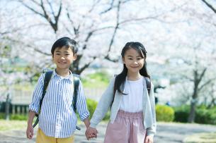 桜の木の下に立つ小学生男女のポートレートの写真素材 [FYI01738336]
