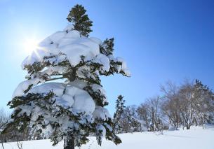 冬の安比高原スキー場の写真素材 [FYI01739242]