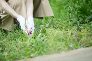 外で庭作業をする女性の手元の写真素材 [FYI01740239]