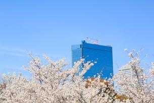 桜とビジネスパークの写真素材 [FYI01740431]