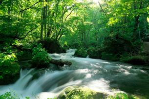 新緑の奥入瀬渓流  阿修羅の流れの写真素材 [FYI01740484]