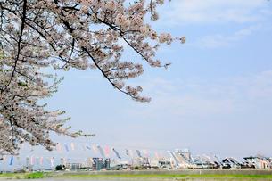 岩手県 北上展勝地の桜の写真素材 [FYI01740560]
