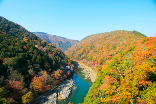 嵐山公園から望む紅葉した京都嵐山と保津川の写真素材 [FYI01740588]
