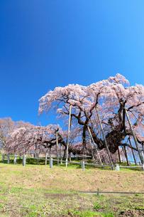 三春の滝桜の写真素材 [FYI01740595]