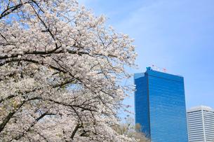 桜とビジネスパークの写真素材 [FYI01740639]
