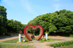 大阪長居植物園の写真素材 [FYI01740658]