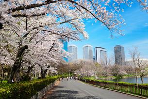 桜とビジネスパークの写真素材 [FYI01740665]