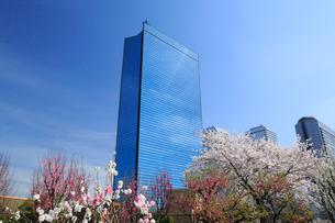 ビジネスパークと桃の花の写真素材 [FYI01740706]