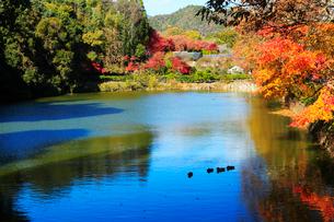 京都嵐山 紅葉した小倉池の写真素材 [FYI01740825]