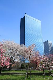 ビジネスパークと桃の花の写真素材 [FYI01740875]