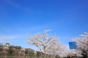 大阪城公園の桜とビジネスパークの写真素材 [FYI01740885]