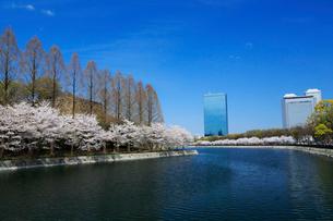 大阪城公園の桜とビジネスパークの写真素材 [FYI01740942]