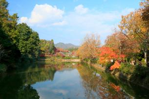 京都嵐山 紅葉した小倉池の写真素材 [FYI01740953]