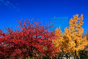 紅葉の大阪城公園から望むビジネスパークの写真素材 [FYI01741024]