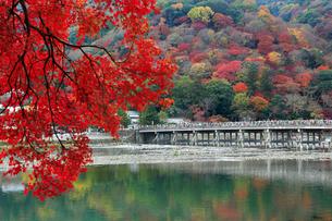 紅葉の嵐山 渡月橋の写真素材 [FYI01741115]